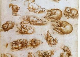 Leonardo da Vinči, skica mačke